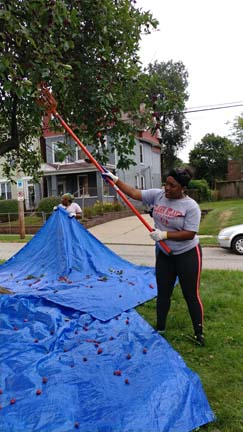 2017 SYPIP Intern Delajah Dennis volunteering in Point Breeze for 412 Food Rescue (Photo by Amma Ababio)