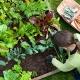 Master-Gardeners-Penn-State